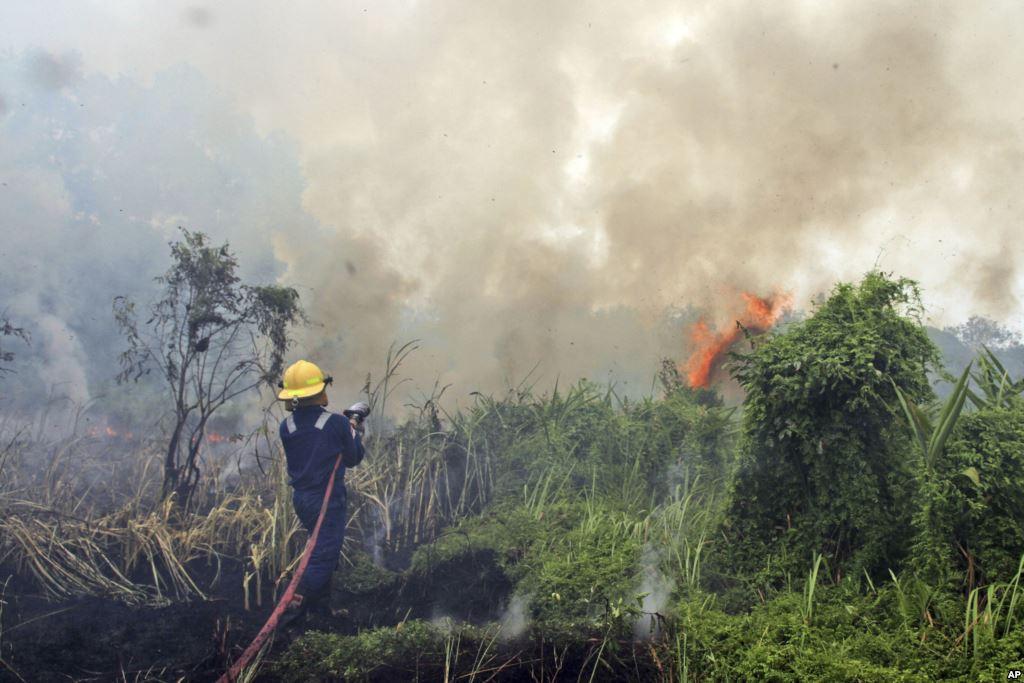 Bencana Kebakaran Hutan dan Lahan Kembali Menghampiri Riau
